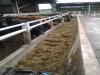 challochmun-feed-trough-02